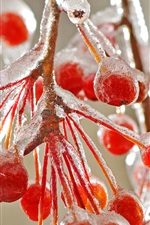 Preview iPhone wallpaper Red berries ice cold winter