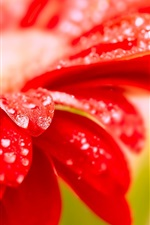 Preview iPhone wallpaper Red flower close-up morning dew
