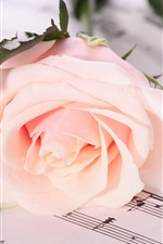 Preview iPhone wallpaper Rose notes