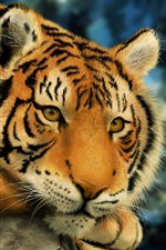Preview iPhone wallpaper Thinking Tiger