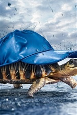 Preview iPhone wallpaper Turtle carrying a hat in rain