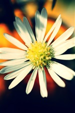 따뜻한 색감의 꽃