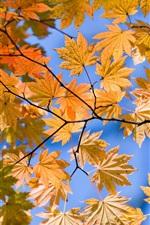 가을 노란색 하단보기 잎