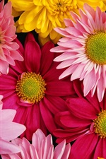 Preview iPhone wallpaper Brightly colored chrysanthemums