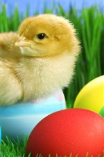 Preview iPhone wallpaper Cute chick and Easter eggs