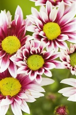 Preview iPhone wallpaper Beautiful flowers in full bloom