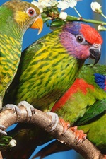 Preview iPhone wallpaper Four green parrots
