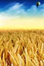 Preview iPhone wallpaper Golden wheat fields