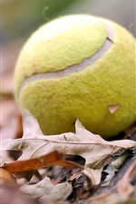 Preview iPhone wallpaper Tennis ball leaves fall mood