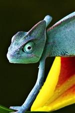 Preview iPhone wallpaper Chameleon on flower