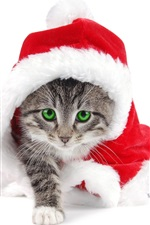 Preview iPhone wallpaper Christmas cat green eyes