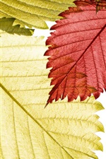 Preview iPhone wallpaper Close-up of red, green and yellow leaves