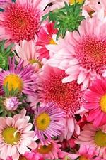 꽃 화려한 아름다운 꿈