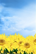 Preview iPhone wallpaper Golden sunflower under blue sky