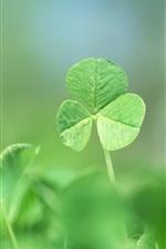 클로즈업 새의 녹색 잎