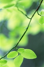 Preview iPhone wallpaper Green leaves of the tree close-up