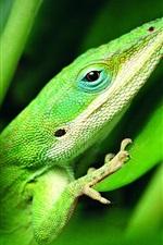 Preview iPhone wallpaper Green lizard