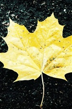 Preview iPhone wallpaper Ground of a yellow maple leaf