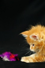 Preview iPhone wallpaper Kitten playing with feathers