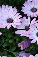 사방이 빛이야 자주색 꽃