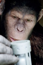 Preview iPhone wallpaper Rise of the Planet of the Apes HD