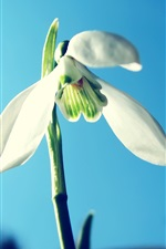 흰 꽃의 세 꽃잎