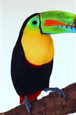 Preview iPhone wallpaper Toucan picture