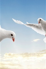 Preview iPhone wallpaper White doves soar sky