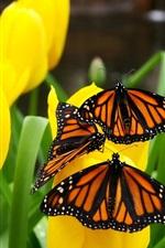 노란색 튤립과 나비