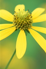 Preview iPhone wallpaper A yellow wild flower close-up