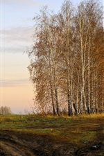Preview iPhone wallpaper Autumn birch