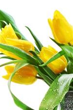 아름다운 노란 튤립 꽃