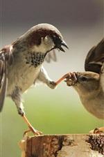 Preview iPhone wallpaper Birds of war