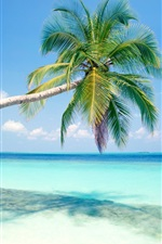 Preview iPhone wallpaper Blue beach a coconut tree