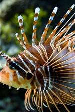 광대 물고기의 밝은 색상