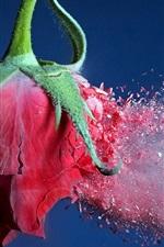 Bullet hit red rose debris flying
