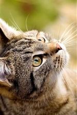고양이는 나무 쳐다보