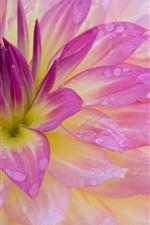 클로즈업 이슬과 핑크 꽃