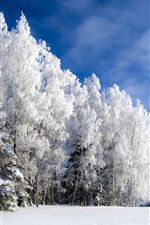 Preview iPhone wallpaper Cold winter trees