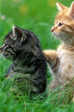 Cute black cat and yellow cat