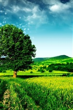 Preview iPhone wallpaper Dream green landscape