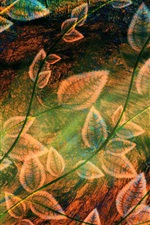 Preview iPhone wallpaper Foliage design abstraction