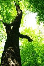 iPhone обои Лесные зеленые листья под солнцем