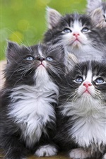 Preview iPhone wallpaper Kittens look