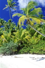 Preview iPhone wallpaper Palm beach sea