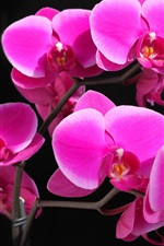 Preview iPhone wallpaper Phalaenopsis orchid crimson beautiful
