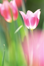 Preview iPhone wallpaper Purple tulips macro photography