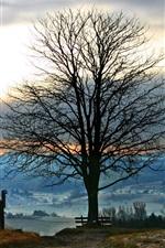 도로 나무 일몰 파노라마
