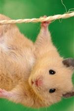 밧줄에 작은 애완 쥐