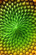 Preview iPhone wallpaper Sunflower flower macro photography